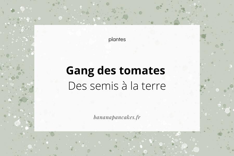 Gang des tomates – Des semis à la terre