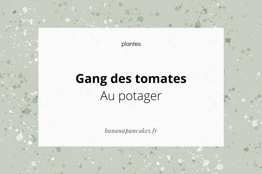 Gang des tomates – Au potager