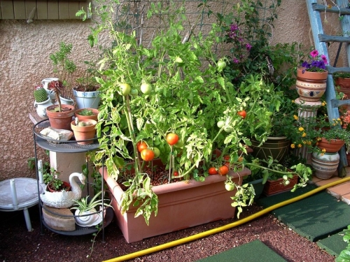 gangdestomates,jardinage,potager,potager urbain,intérieur,plants,semis,conseils